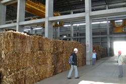 Corn Stover bales at DP CleanTech power plant. Baling is only necessary if the fuel needs to be transported over long distances and stored or stored for several months. The bales are broken up before entering the boiler.